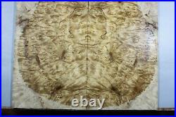 5A Barky Golden Camphor Wood Burl les paul Guitar Drop Top Set Luthier Y372-1