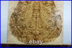 5A Barky Golden Camphor Wood Burl les paul Guitar Drop Top Set Luthier #Y376-1