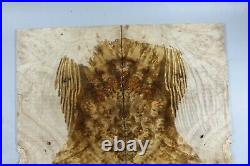 5A Worm-hole Golden Camphor Wood Burl Electric Bass Drop Top Set Luthier Y423-1