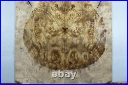 #Y359-1 5A Barky Golden Camphor Wood burl Electric Bass Drop top set Luthier
