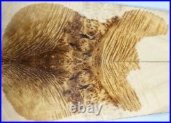 Y366-1 5A Spalted Golden Camphor Wood Burl les paul Guitar Drop Top Set Luthier