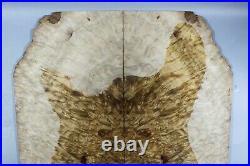 Y383-1 AAAAA Barky Golden Camphor Wood Burl les paul Guitar Drop Top Set Luthier