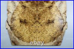 #Y447-1 5A Barky Golden Camphor Wood Burl les paul Guitar Drop top Set Luthier